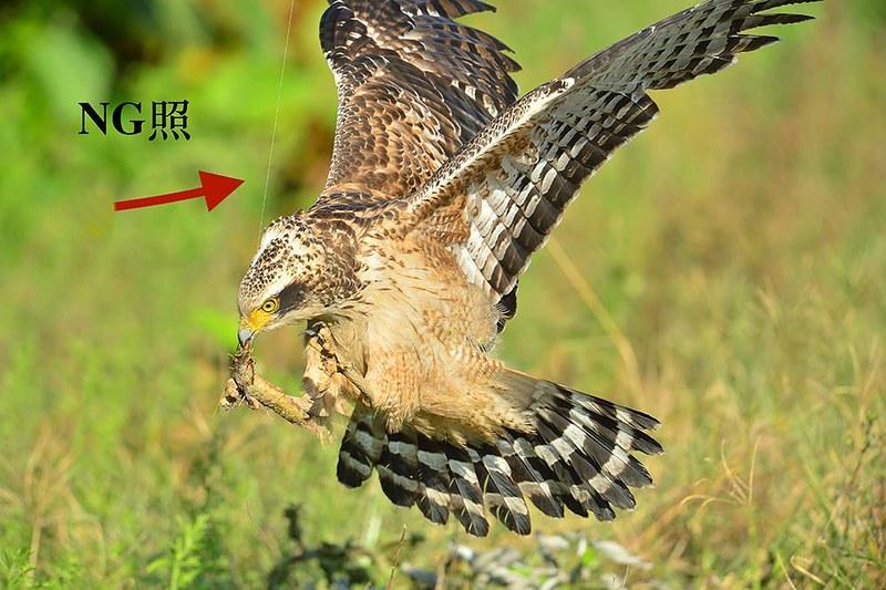 以綁在線上的食物來誘拍鳥類的NG照(線材忘記修掉)。
