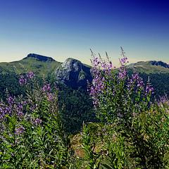 Monts du Cantal, Auvergne, France