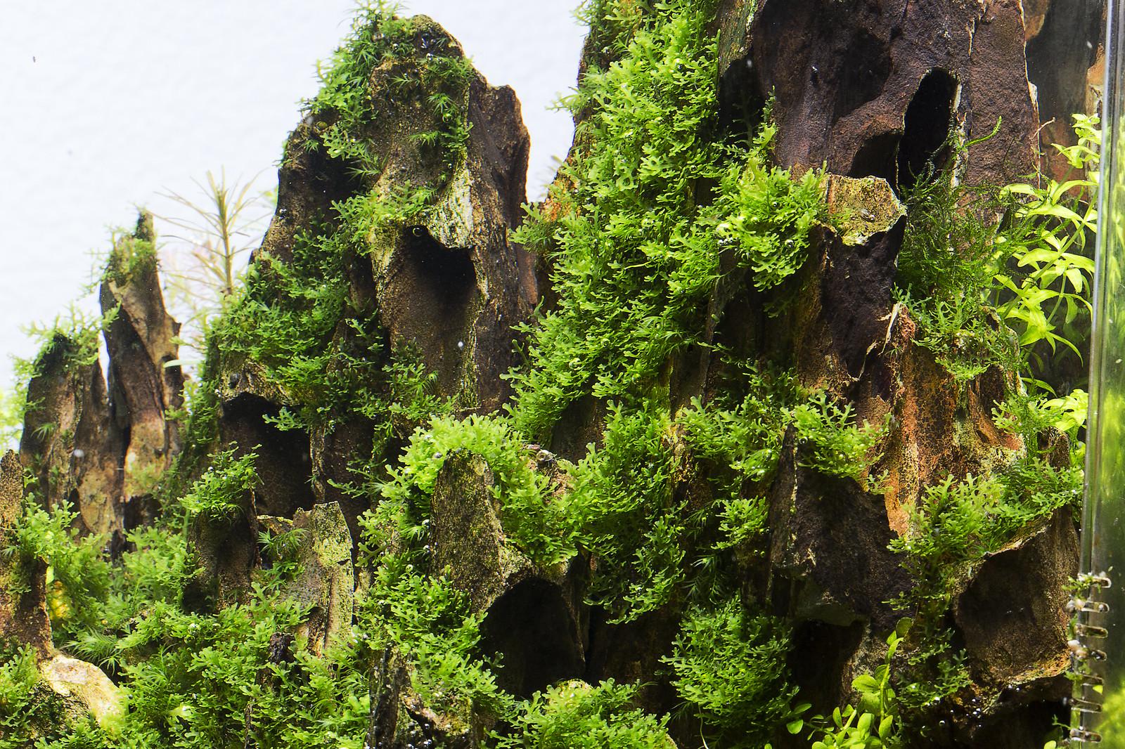 Aquascape Ideas Aquascape Moss On Rock