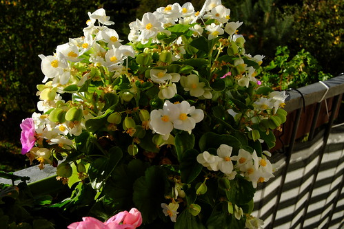 DSCF8607.jpg balkon