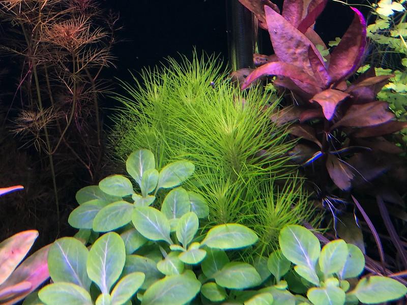 Plant Package For Sale Gta Aquaria Forum Aquarium Fish