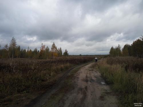 Вдоль Дубовицкой канавы к западу от оз. Острец