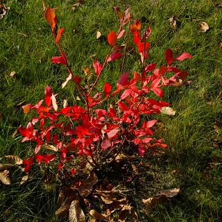 Jesień - Autumn DSCF8592.jpg silky
