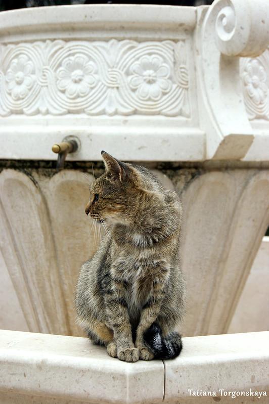 Кот, сидящий на фонтане