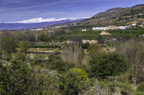 Vista de Benecid, con el Mulhacén al fondo