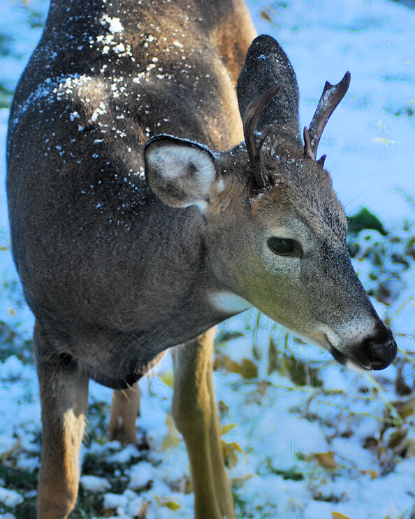 2018-10-09.deer6