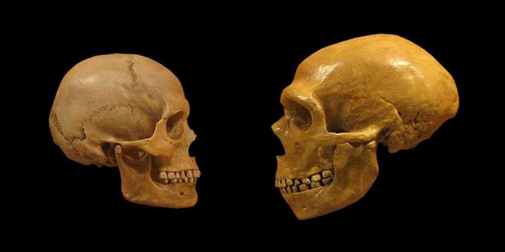 Des dents révèlent de nouveaux chapitres de notre évolution