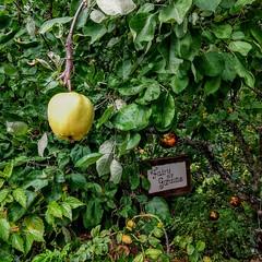 Apple Tree entrance