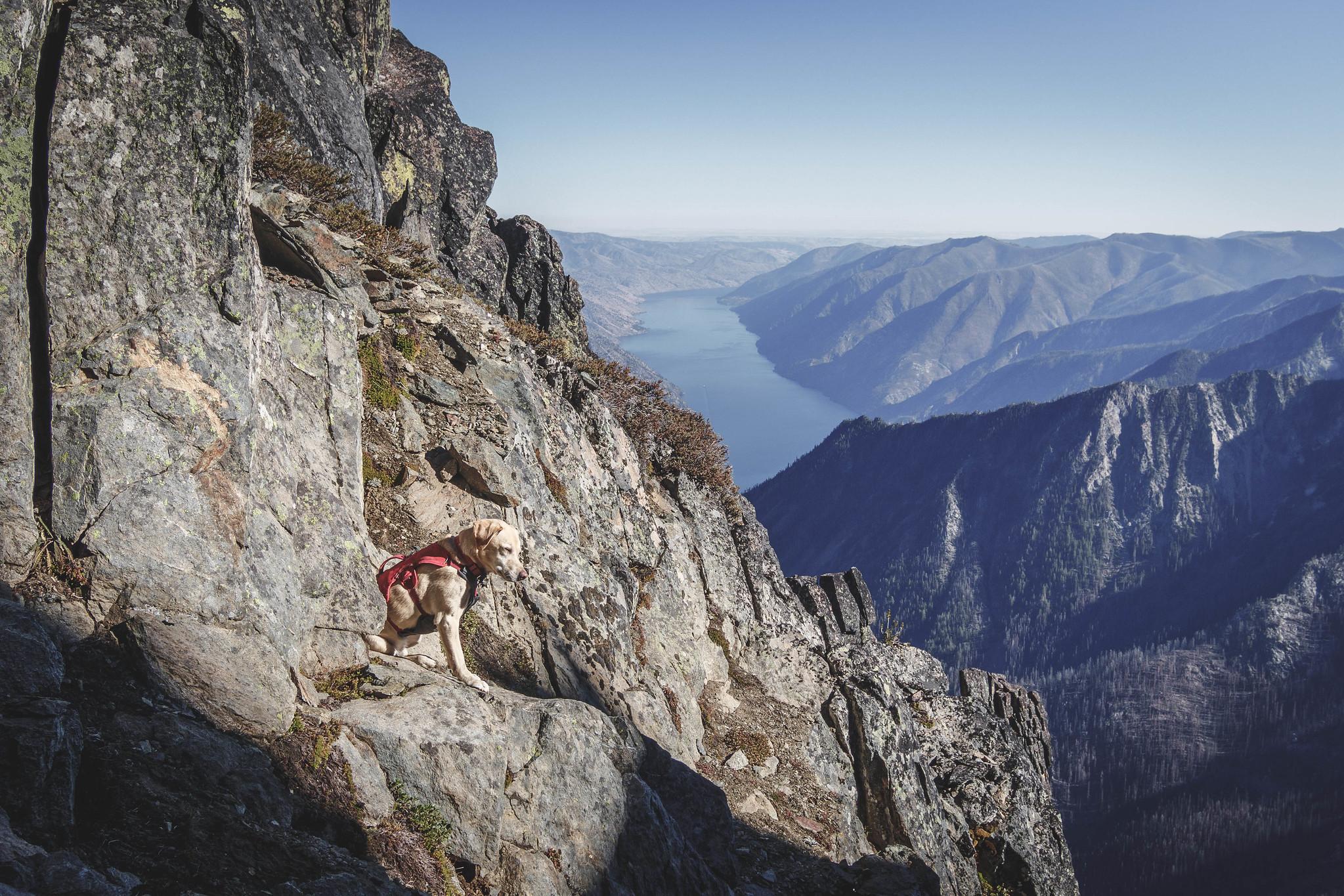 Summit dogs on Cloudcomb Peak