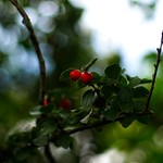 2018:09:24 11:39:26 - Fruit Garden Bokeh - Tarbek - Schleswig-Holstein - Germany