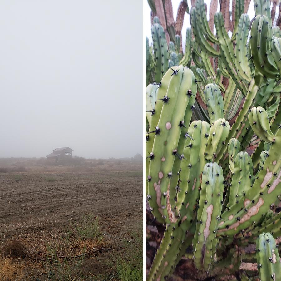 desert-misty-morning-1