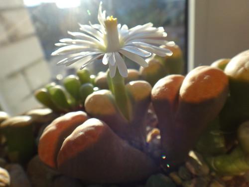 Еще один день цветения