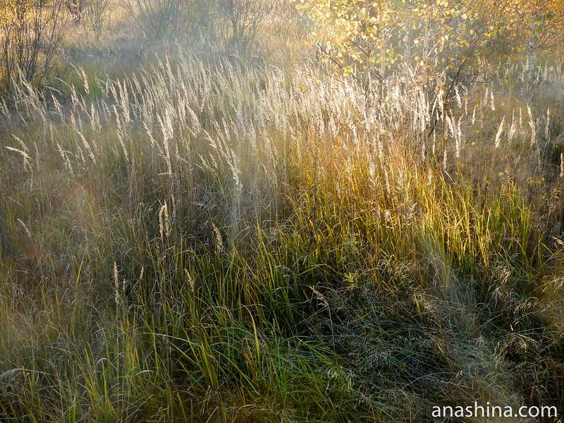 Полевые травы, осень, Московская область