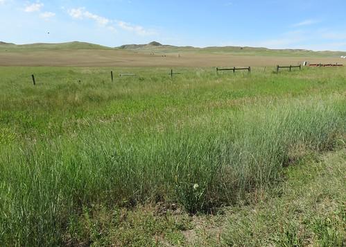 Northeastern Wyoming Landscape (Leiter, Wyoming)