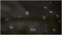 Petite Belle Fleurs 1