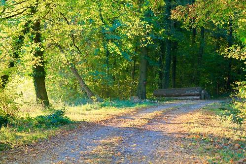 Chemin forestier ...