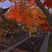 Philomena Autumn Dawn on Thoreau St._005