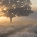 A Rare Frosty September morning by Chaitanya Deshpande | Photography