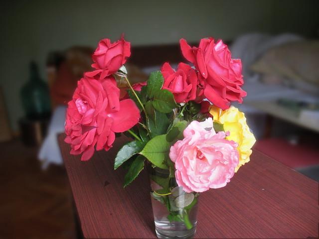 Ruže za Dragu
