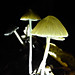 Roundhay park at night with fairy umbrellas
