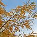 Autumn Colour:     290/365