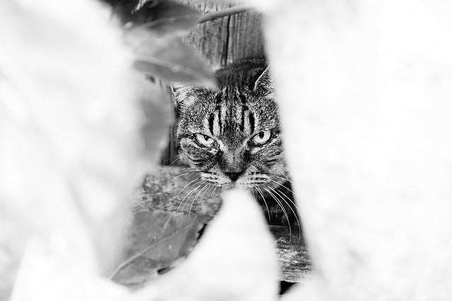 Today's Cat@2018-10-30