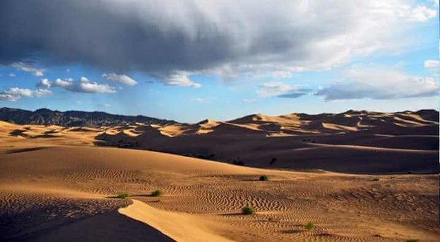 4748 Do you know that Saudi desert used to be a Green Jungle 03