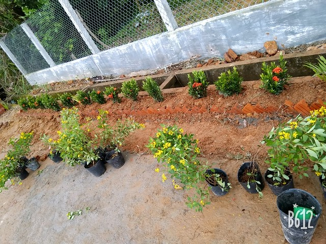 Tuổi trẻ trồng hoa