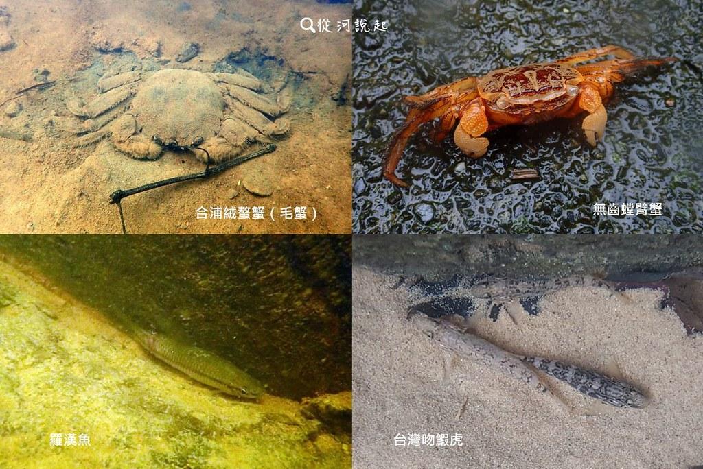 6_終於在小小的沉砂池裡看見了生物!