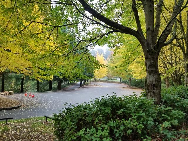 Scenes from my morning walk in Lynnwood.