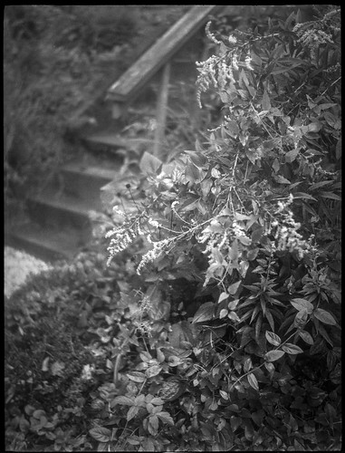 ragweed blossoms steps concrete railing westasheville northcarolina zenobia rolleirxp400 kodaktmaxdeveloper folder 120 120film film mediumformat 6x45 blackandwhite landscape