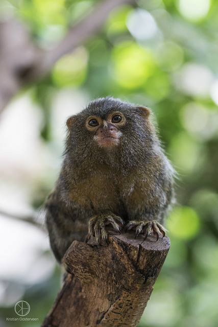 The Stare of a Monkey