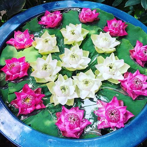 ジムトンプソンの家で 日本語ツアーは助かりますね #bkk #bangkok #travel #travelphotography #travelphoto #traveler #instatravel #bangkokinsta #bangkoktra #bangkokdiscovery #discoverbangkok #travelgram #foodphoto #travelphotosc #写真 #旅写真 #旅 #バンコク #タイ #jimthompson