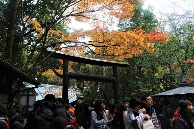 nomiyajinja-torii005