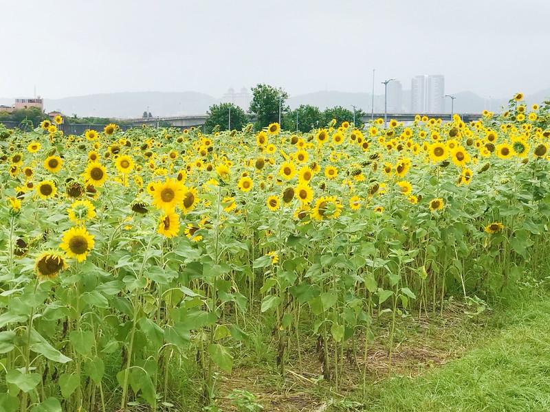彩虹河濱公園_181006_0064