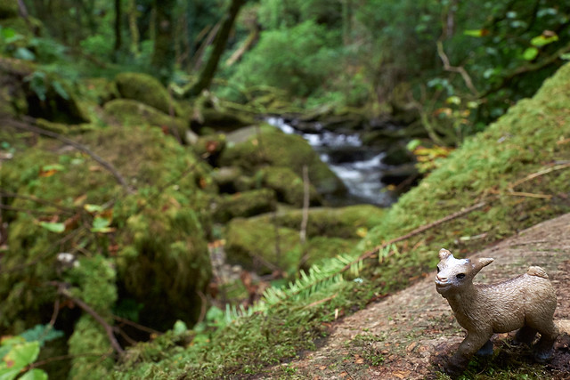"""""""it's so green in ireland,"""" says baby goat."""