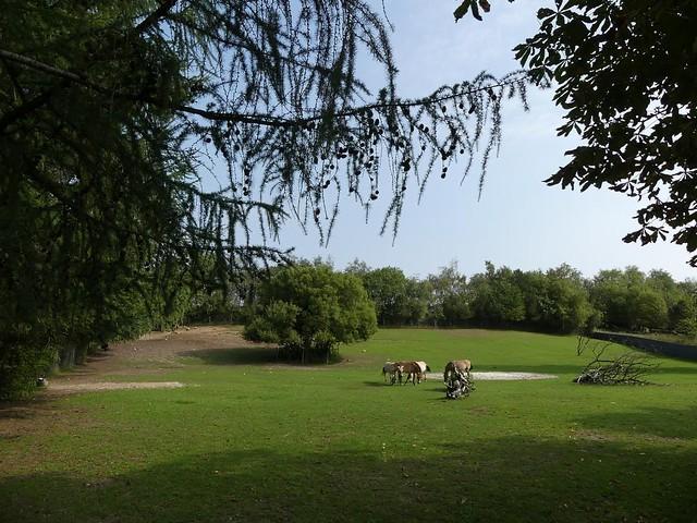 Przewalskipferdanlage, Zoo Givskud