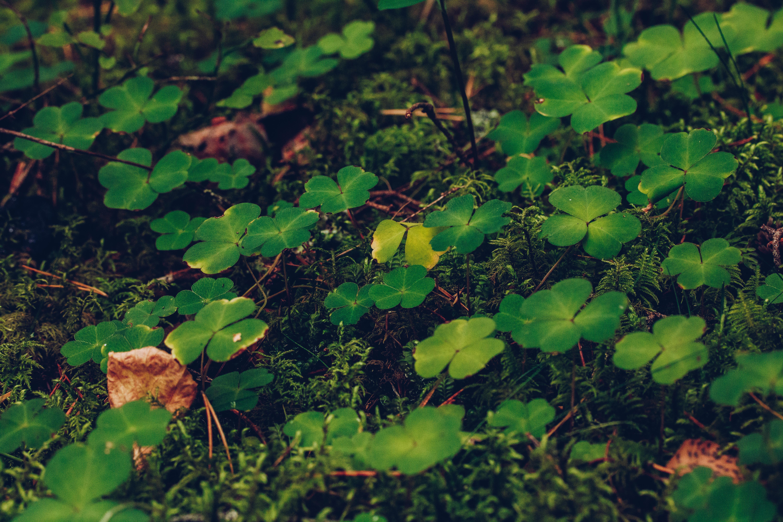 Miljömedvetna val - reaktionista.se