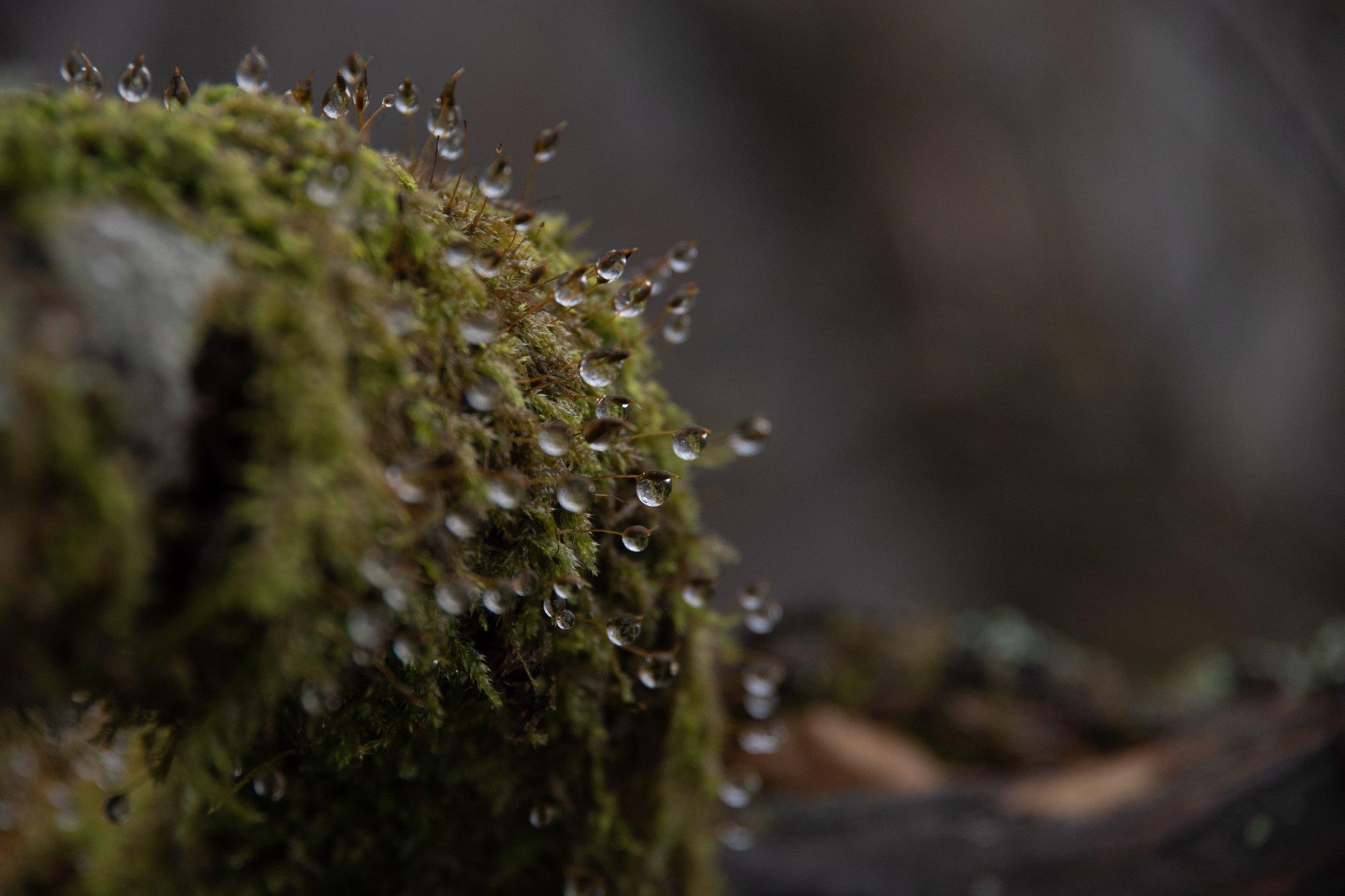 Moss paradise!!