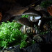 fairy fungi shelters