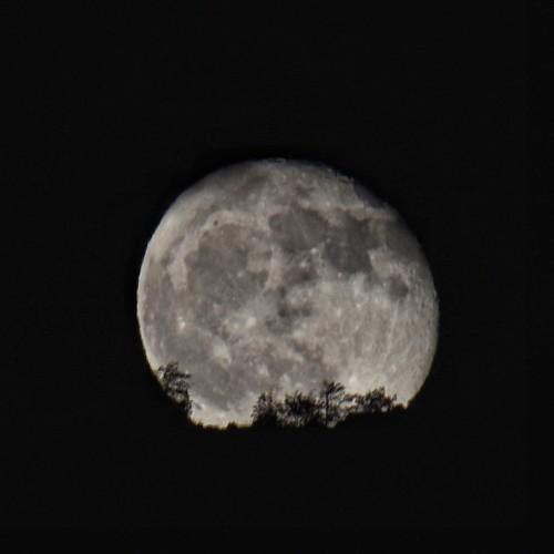 #luna #moon bella grossa appena nata da #Frascineto Per servizi foto e video contattami al: 📞 3471016791 o ✏ scrivi a questa pagina!