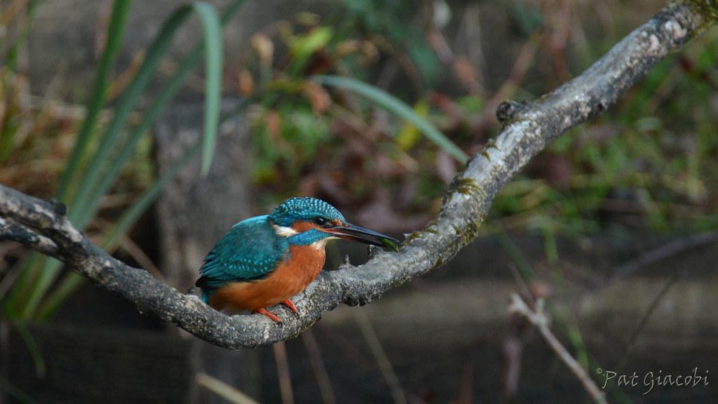Sortie Réserve Ornithologique du Teich - 21 octobre 2018 - Page 4 44876184094_5e184f159f_b