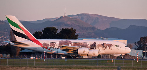 Airbus A380-861 - A6-EEQ (wildlife livery)