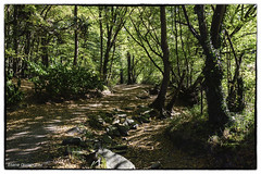 Bois de Serres (Rhône)