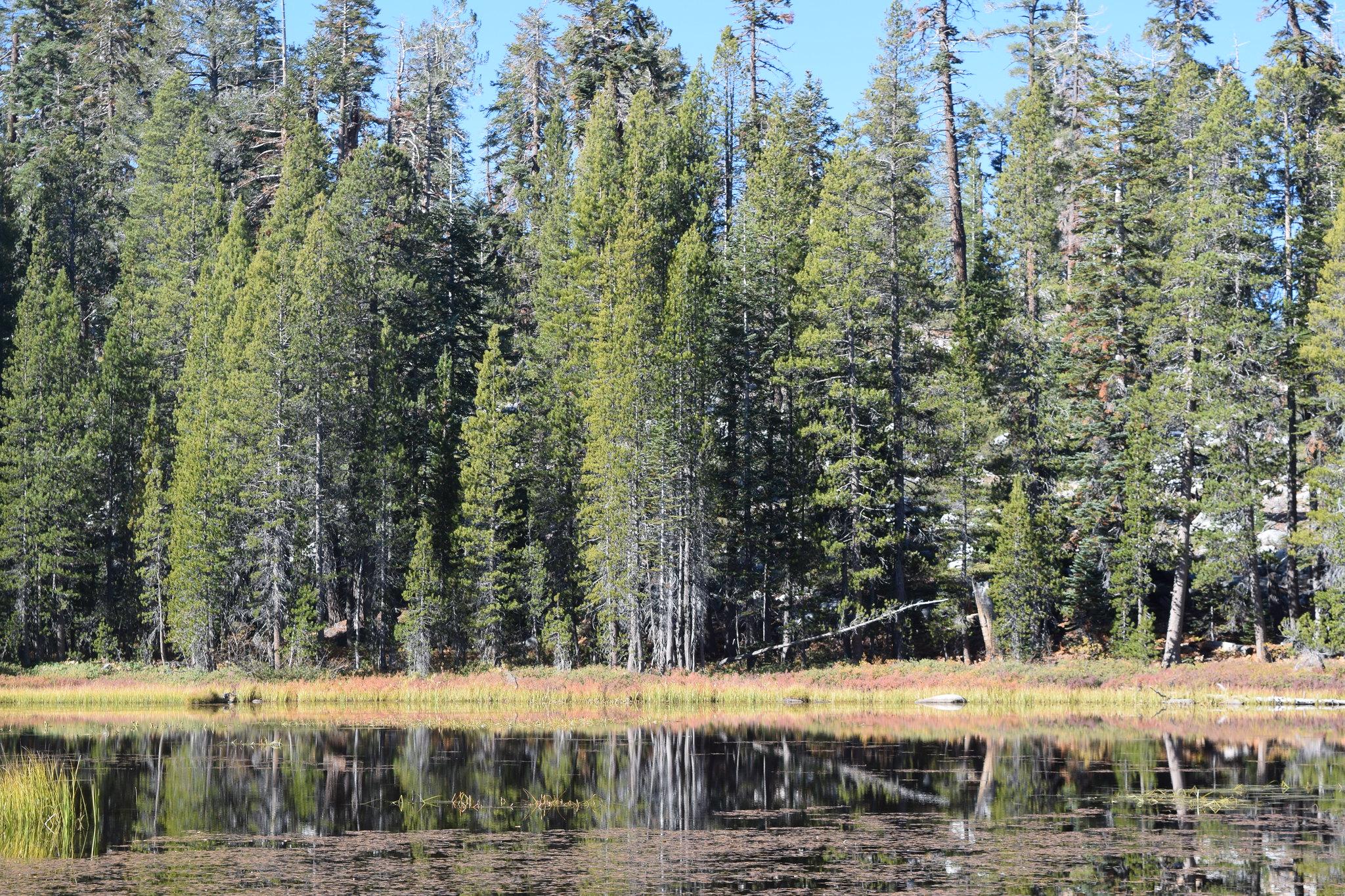 Yosemite National Park - The Tuolumne Meadows Road Alpine pond