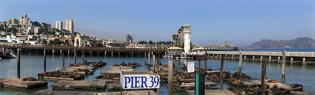 sea-lions-670223_640
