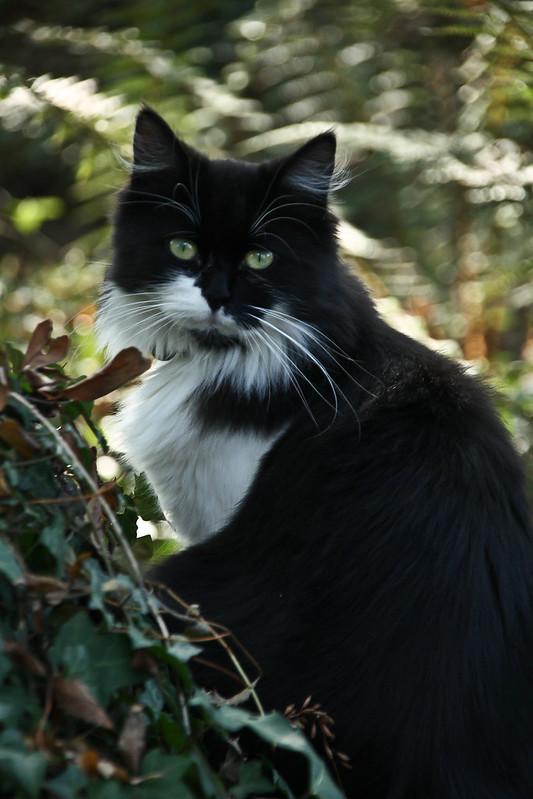 Rencontre du 3ème chat