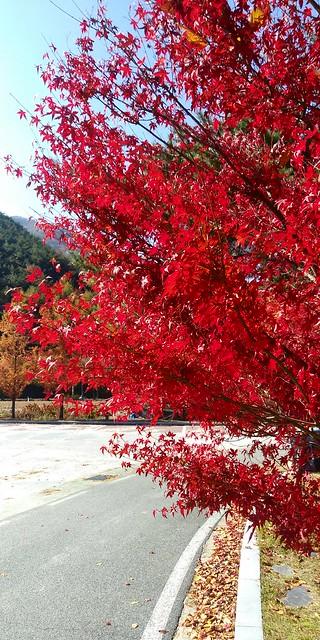 가을햇살 좋은 날