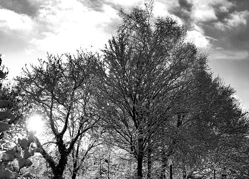 Winter snowscape (buckaroos70)