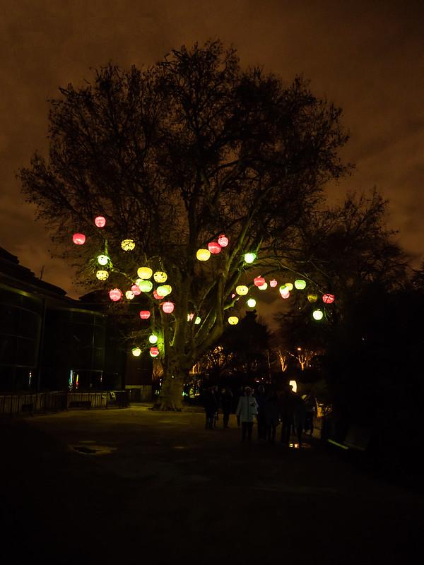 Ambiances devant les Espèces en voir d'illumination... 46246184731_662b3bbdda_c